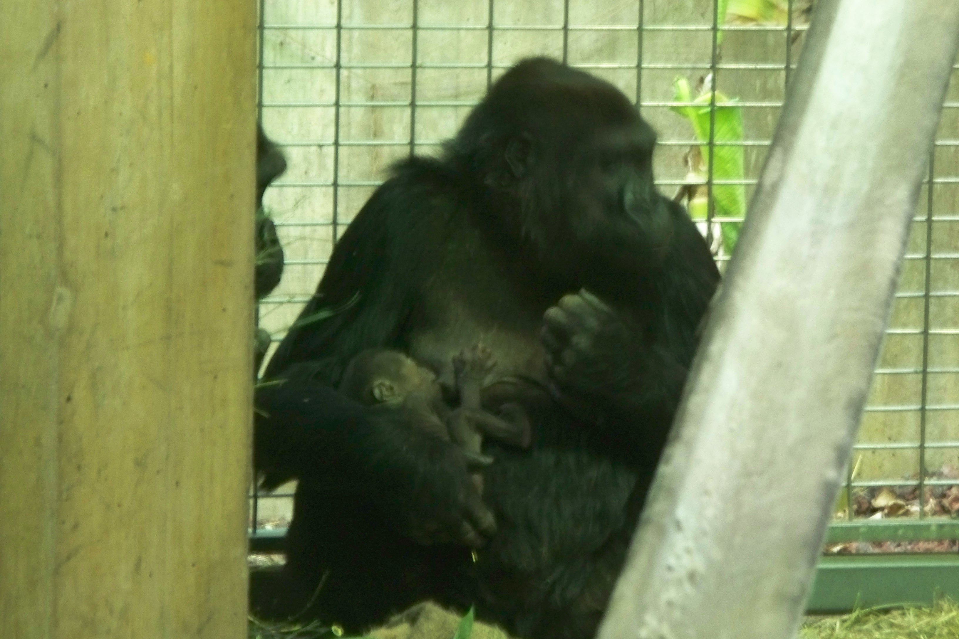 The National Zoo's newest baby