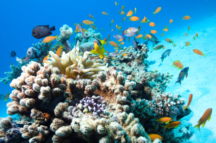 coral reef in Red Sea, copyright iStockphoto/wierdeau