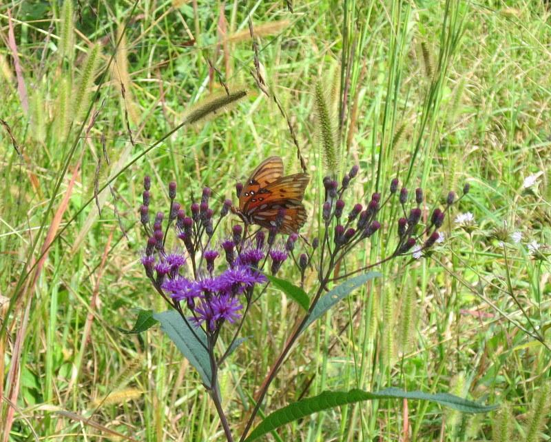 Chattanooga Nature Center