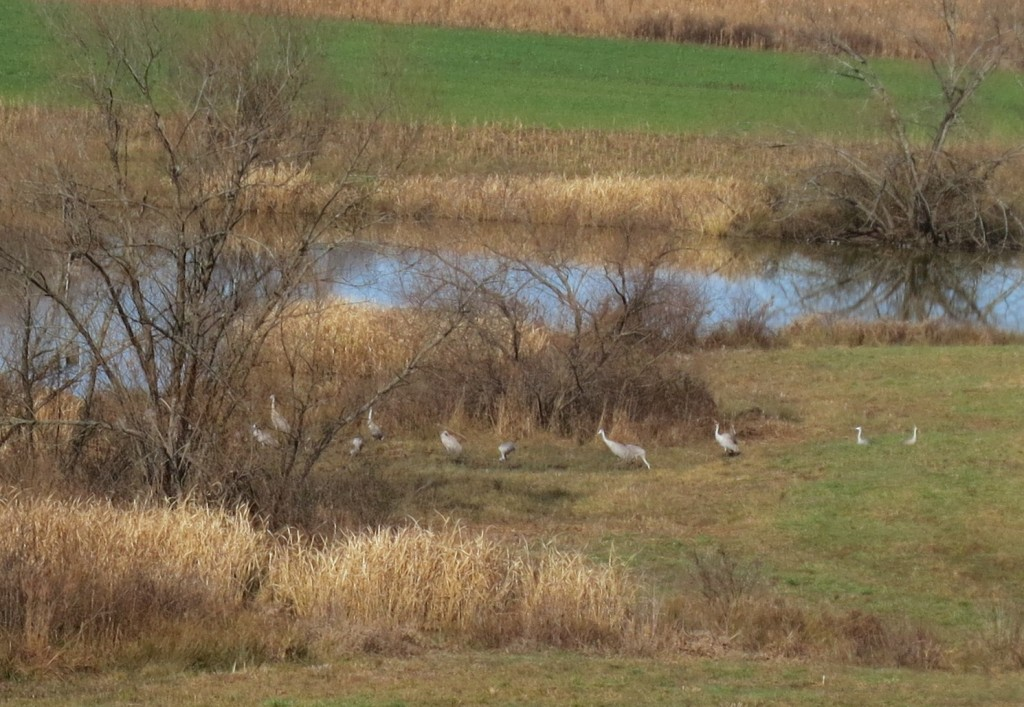 several sandhills in a field